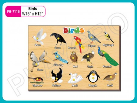 Birds Activity Toys Delhi NCR