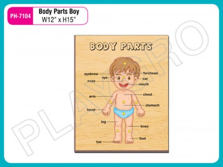 Body Parts Boy Activity Toys Delhi NCR